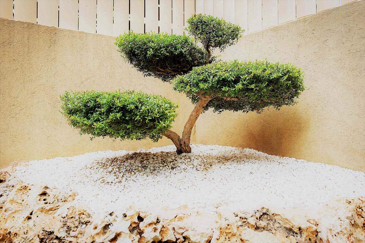 עץ הבונסאי שבפינת הגינה בבית פרטי באבן יהודה בעיצובה של שירית דרמן
