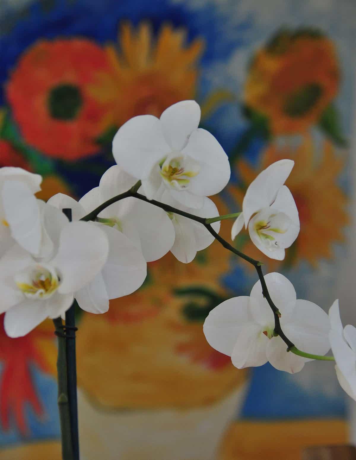 סחלב לבן על רקע ציור צבעוני תלוי על קיר בית פרטי בהוד השרון - שירית דרמן מעצבת פנים