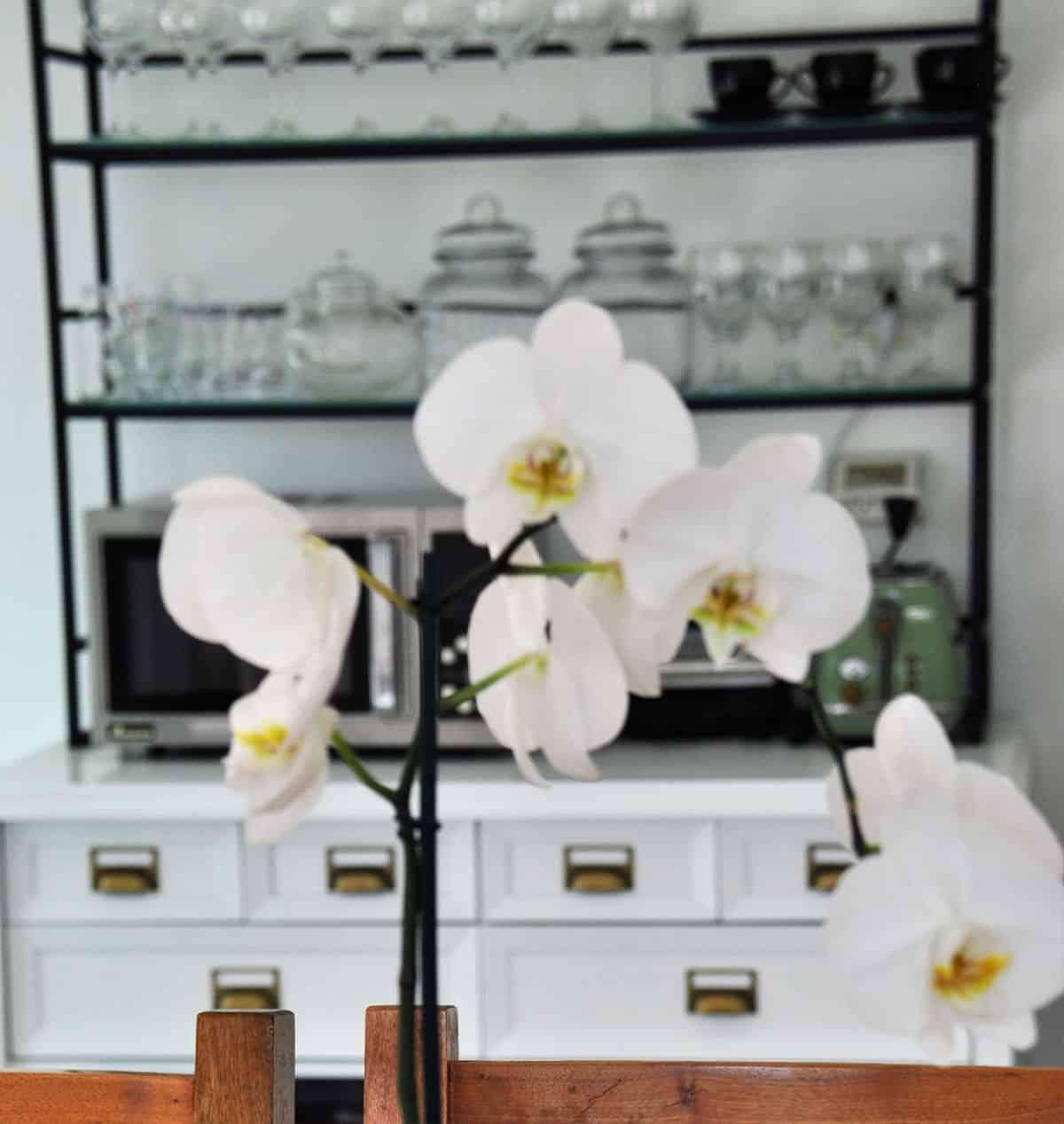 סחלב לבן על רקע ויטרינת המטבח בבית פרטי בהוד השרון - שירית דרמן מעצבת פנים